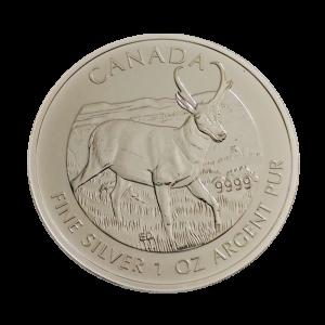 Canadian Antelope