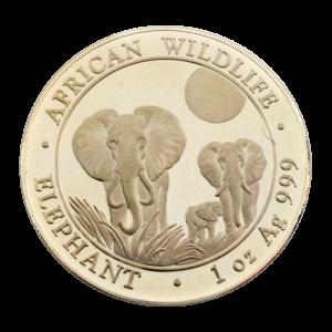 Somalian Elephant
